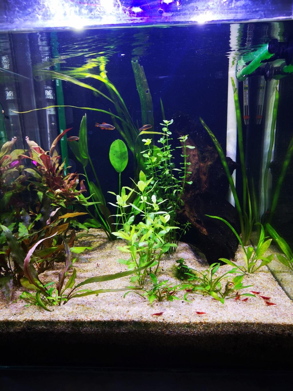 Présentation et description de mon aquarium  15442610