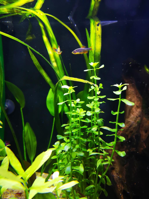 Présentation et description de mon aquarium  15442811