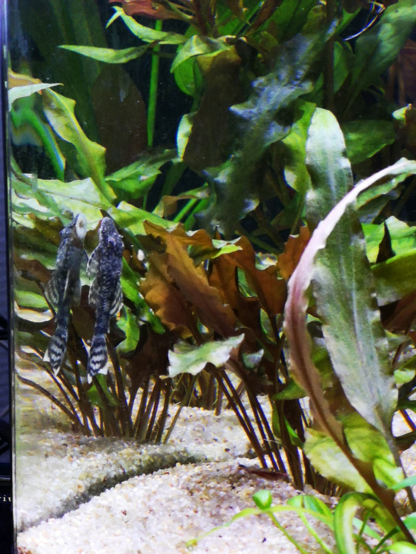 Présentation et description de mon aquarium  15442812