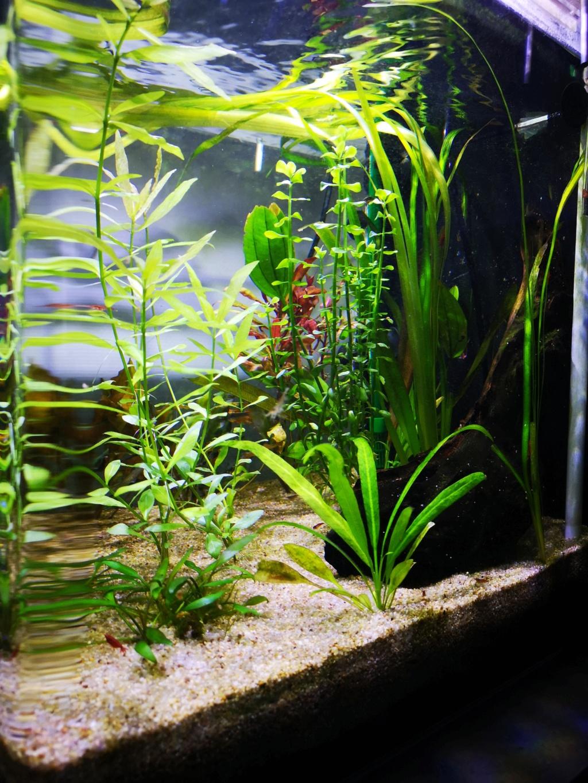 Présentation et description de mon aquarium  - Page 2 15453813