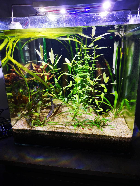 Présentation et description de mon aquarium  - Page 2 15453814
