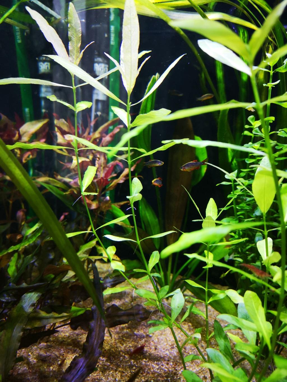 Présentation et description de mon aquarium  - Page 2 15453815