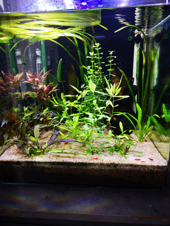 Présentation et description de mon aquarium  - Page 2 15454713