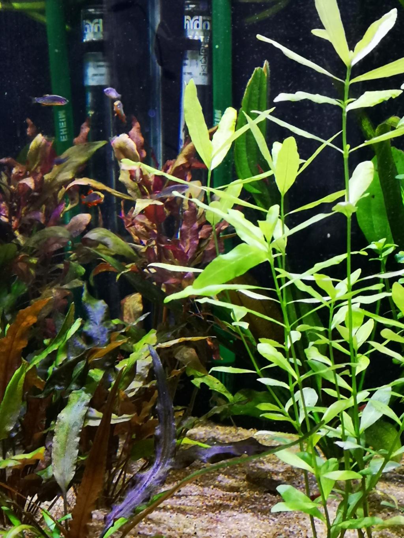 Présentation et description de mon aquarium  - Page 2 Img_2015