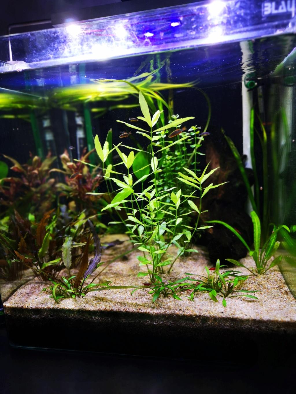 Présentation et description de mon aquarium  - Page 2 Img_2016
