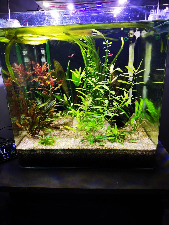 Présentation et description de mon aquarium  - Page 2 Img_2030
