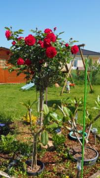 Mon jardin au commencement!  - Page 4 P5201212