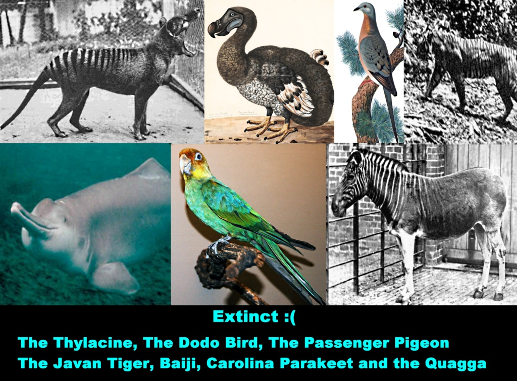 Cryptozoology & Ufology Discussion: My Sasquatch sighting and Me & T-REX Sue! Extinc10