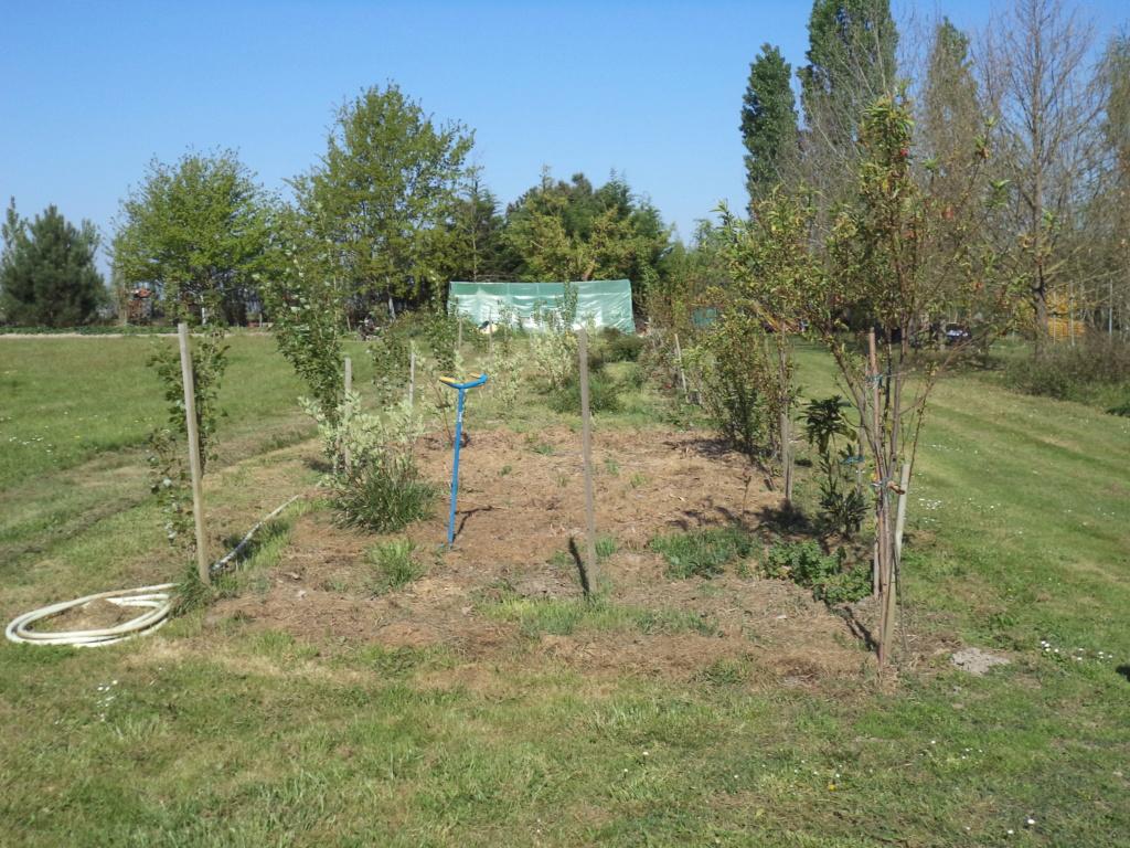 permaculture et autres jeux de jardin - Page 3 Dsc01610