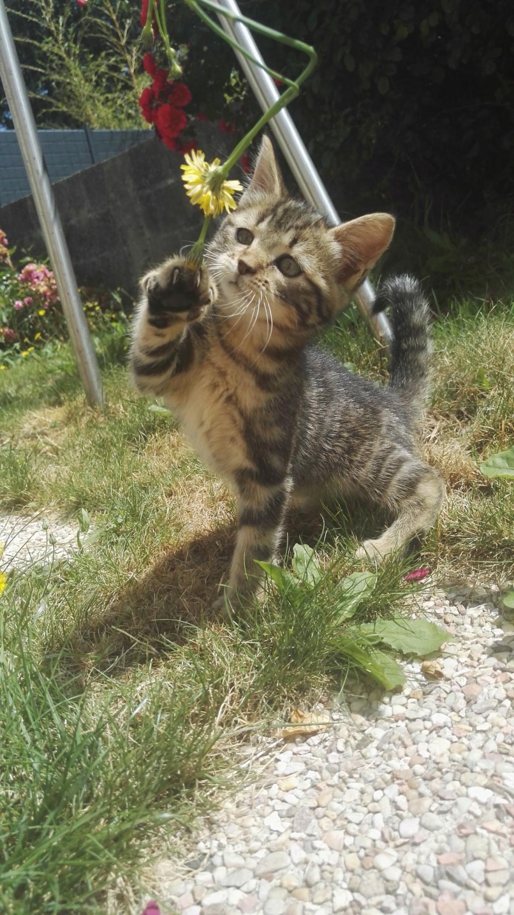 Orsolla chatonne Marron Tabby (née vers le 04/05/18) Img_2023