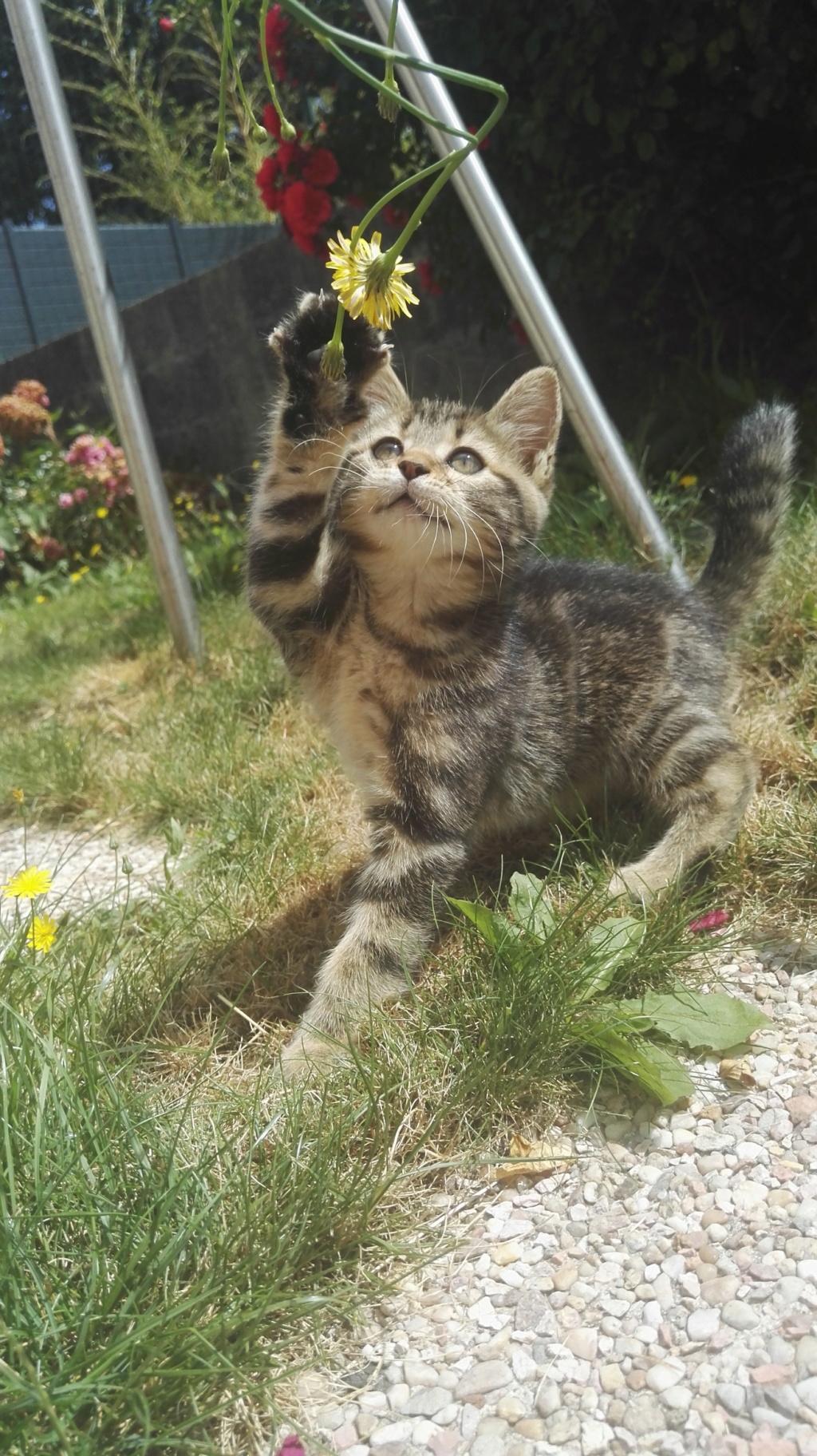 Orsolla chatonne Marron Tabby (née vers le 04/05/18) Img_2025