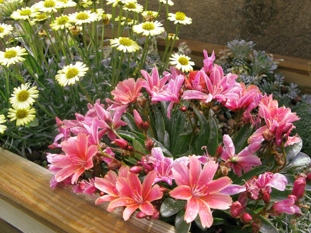photos de plantes rares - Page 2 Img_0210