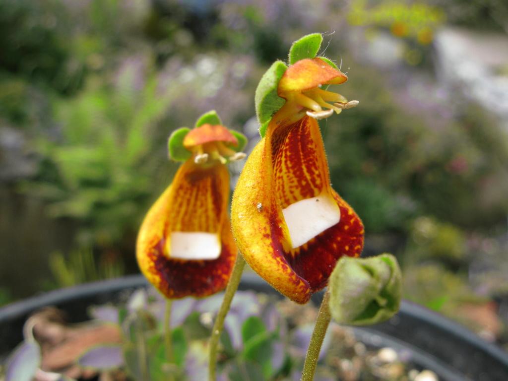 photos de plantes rares - Page 2 Img_0212