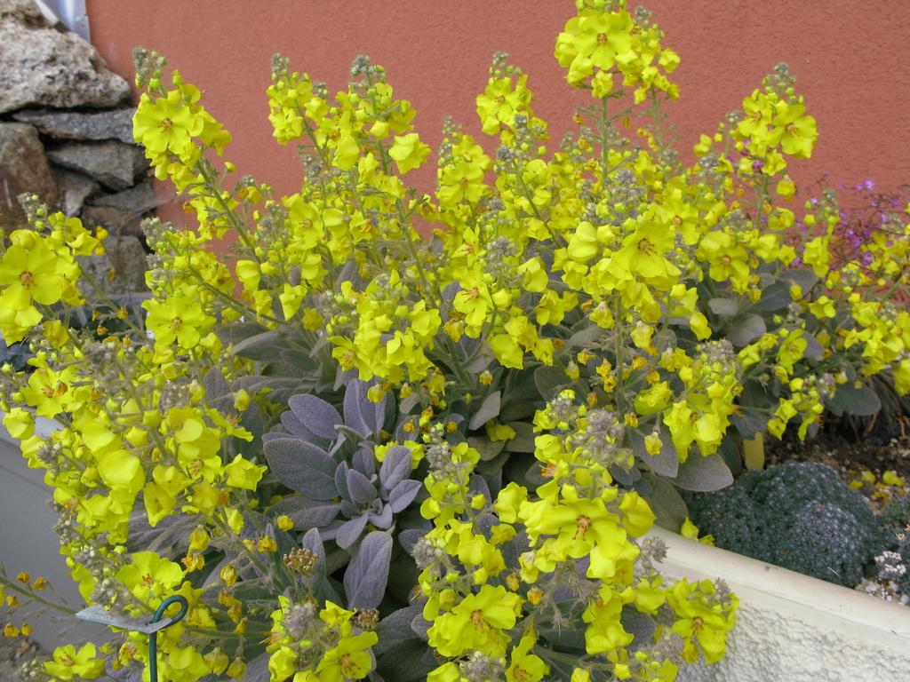 photos de plantes rares - Page 2 Img_0213