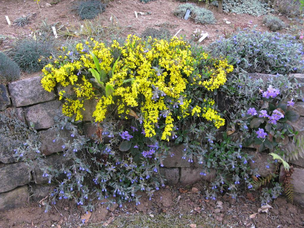 photos de plantes rares - Page 2 Img_0214