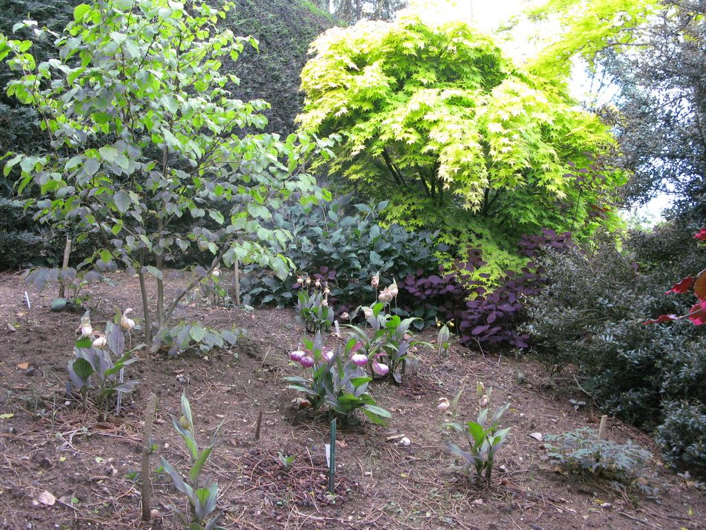 photos de plantes rares - Page 2 Img_0215