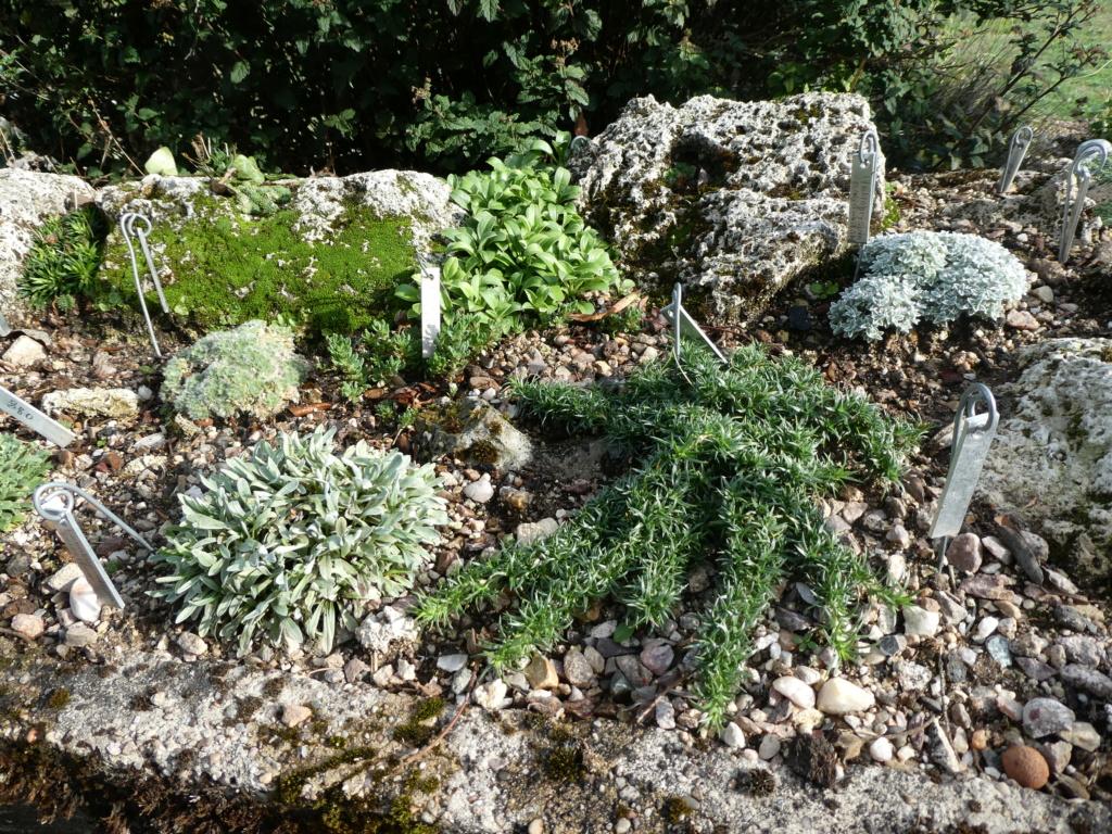 petit aperçu de mes rocailles - Page 5 P1000315