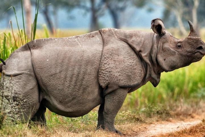 حيوانات الانقراض العالم