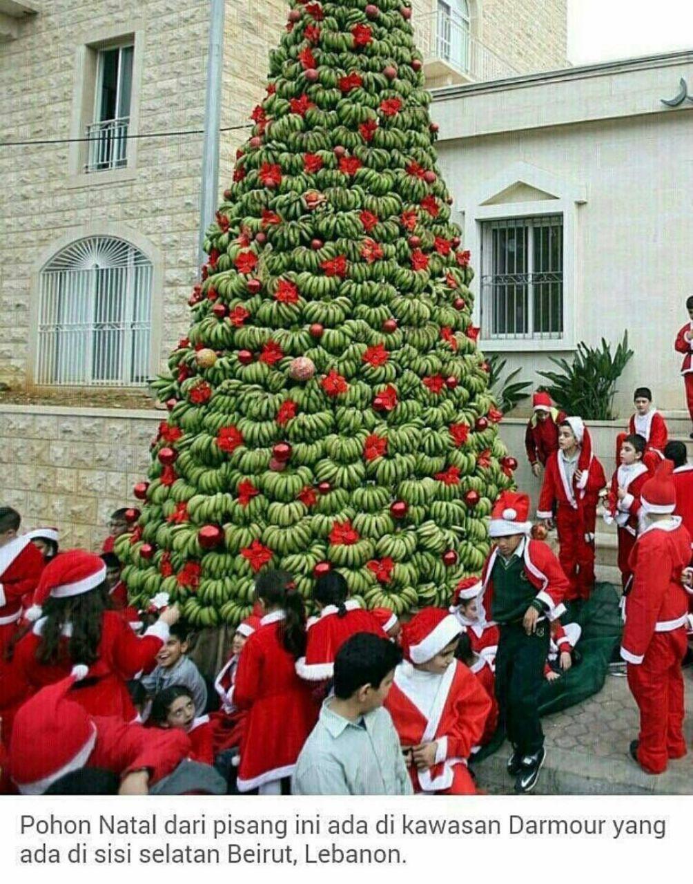 聖誕樹‧臭豆‧榴槤 Panana10