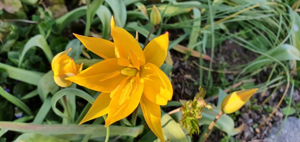 Erste Frühlingsboten im Garten und in Wald und Flur - Seite 94 20200428