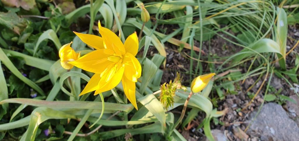 Erste Frühlingsboten im Garten und in Wald und Flur - Seite 94 20200429