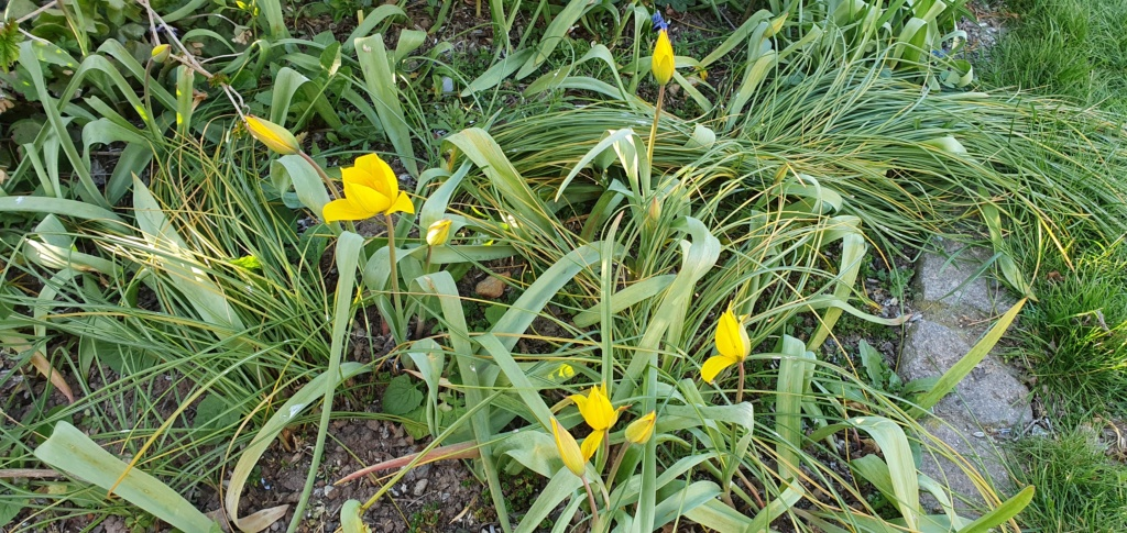 Erste Frühlingsboten im Garten und in Wald und Flur - Seite 94 20200430