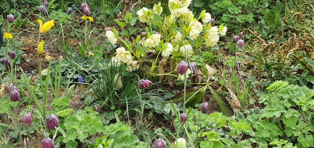 Erste Frühlingsboten im Garten und in Wald und Flur - Seite 95 20200435