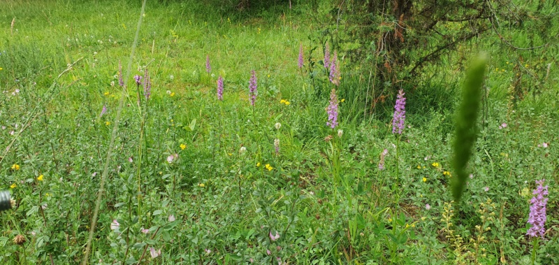 Orchideen 3 (fortlaufende Seiten 300 bis 400) - Seite 74 20200978