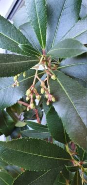 Ericaceae - Seite 3 20201517