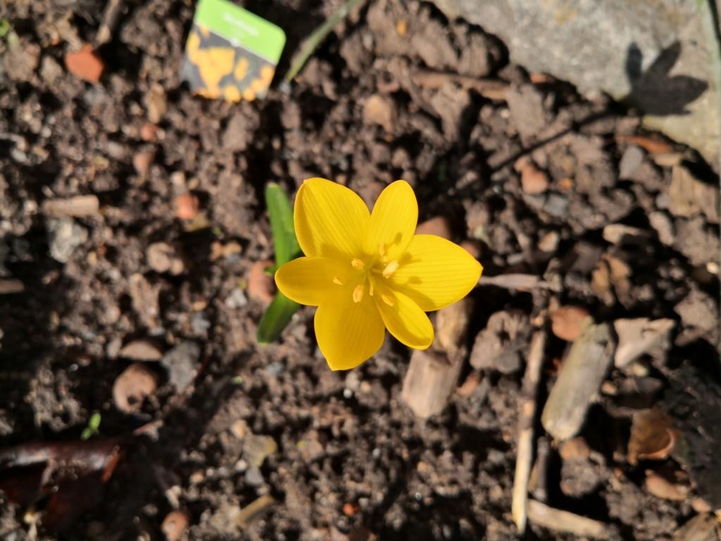 Amaryllisgewächse - Amaryllidaceae (Hippeastren, Nerine, Amaryllis, Agapanthus und auch Allium & Narzissen) - Seite 62 Img_1273