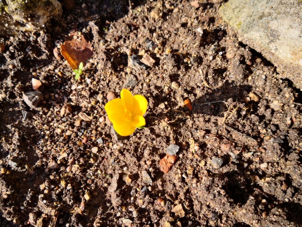 Amaryllisgewächse - Amaryllidaceae (Hippeastren, Nerine, Amaryllis, Agapanthus und auch Allium & Narzissen) - Seite 62 Img_1274