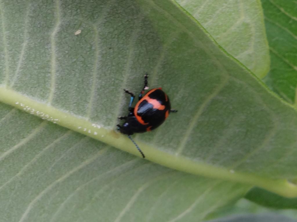 connaissez-vous cet insecte??? Dsc00912