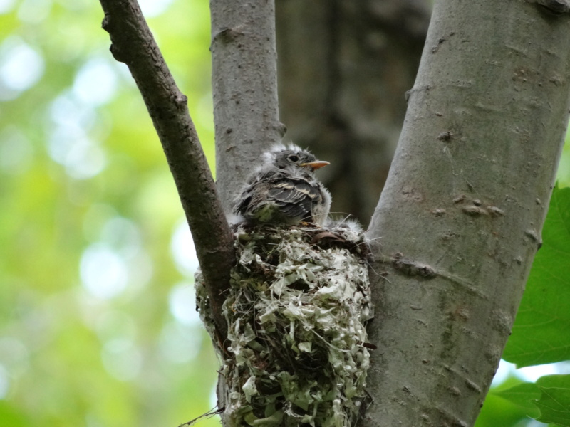 oiseau dans son nid Dsc09114