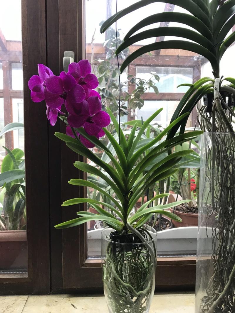 Orchideen-Neuzugang 2 - Seite 18 Ascoce10