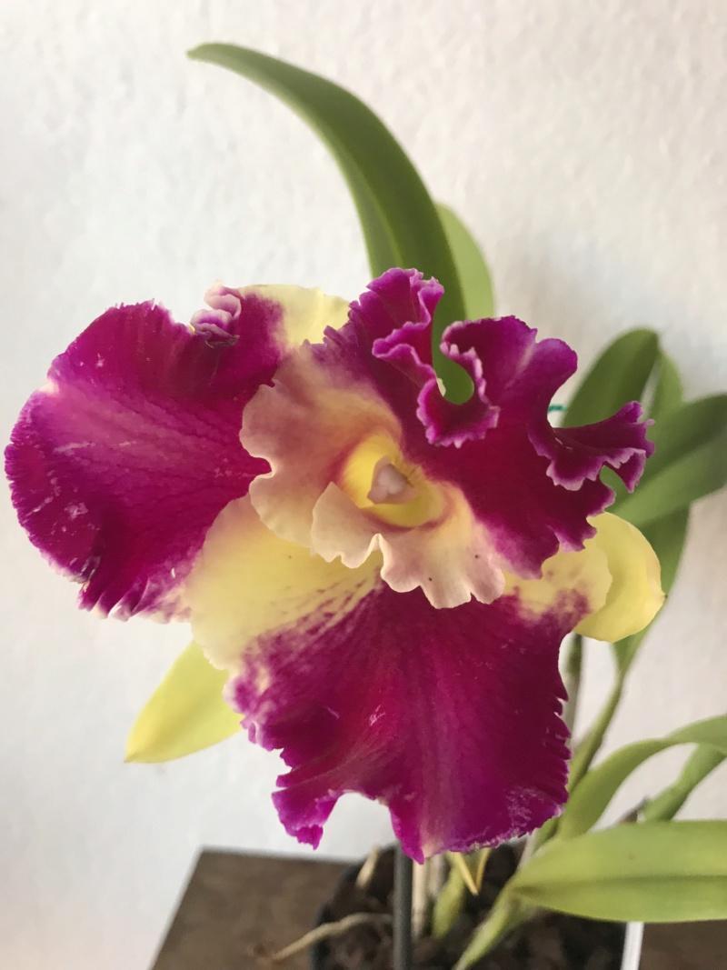 Orchideen-Neuzugang 2 - Seite 14 Blckat10