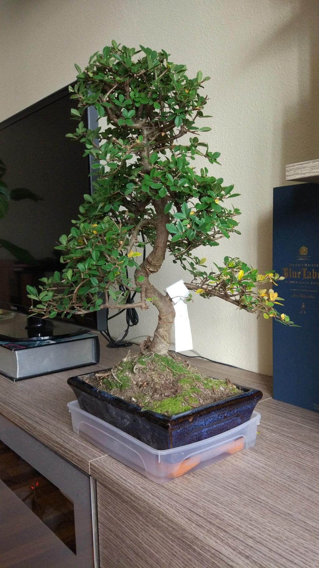 Novato en el mundo del bonsai Img_2010