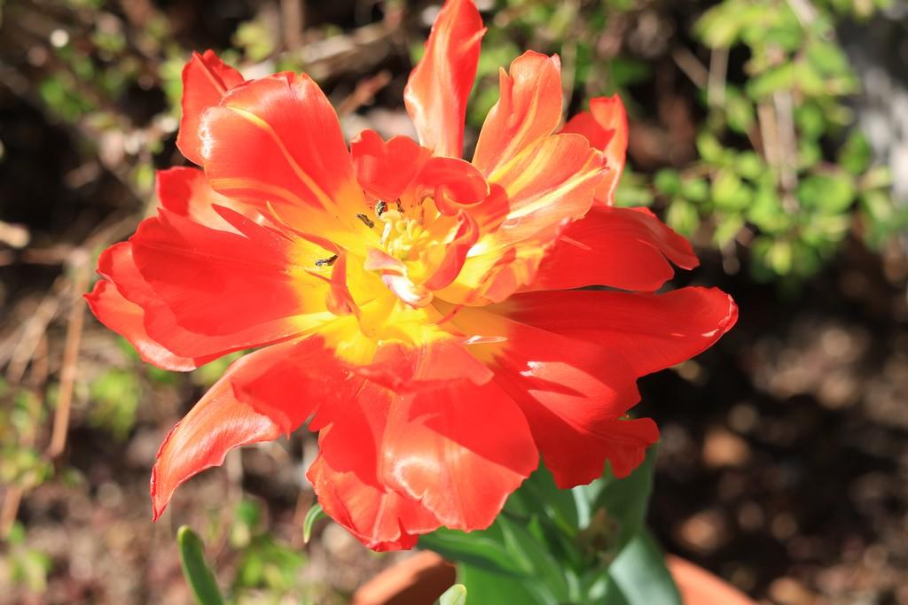 Thème du mois d'octobre 2019 :   Fleurs et jardins  Fleur10