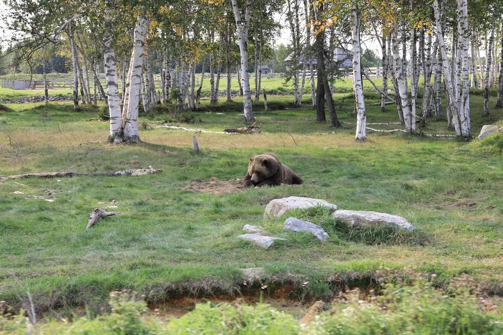 Mon voyage au pays de nos cousins Canadiens Zoo_st10