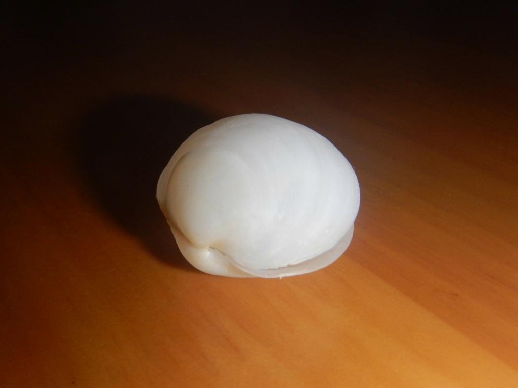 Euanodontia ovum (Reeve, 1850) Dscn8518