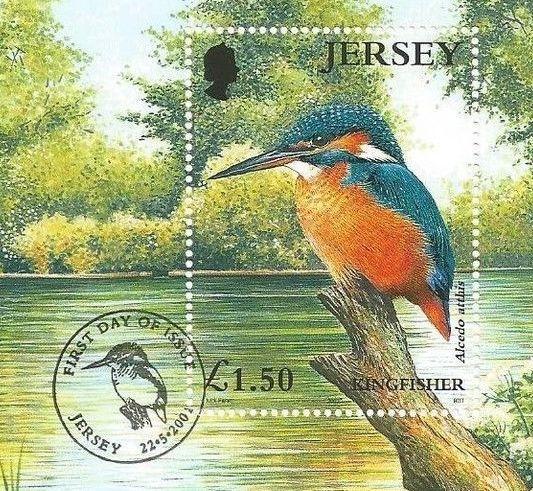 Eisvögel der Welt Jersey10