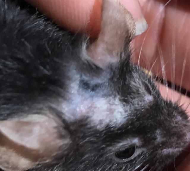 Scratching & dark purple spots on the skin Img_3515