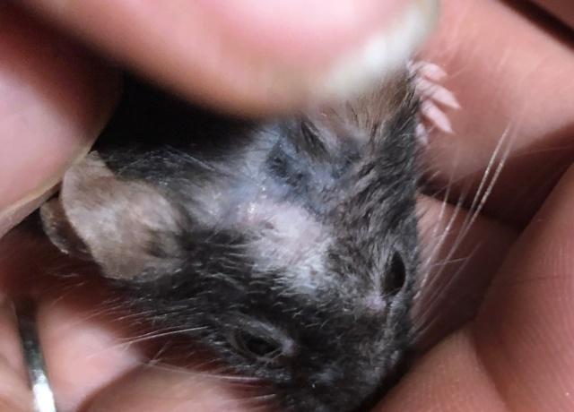 Scratching & dark purple spots on the skin Img_3516