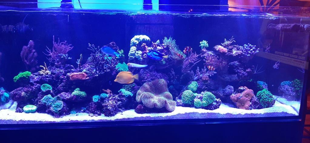 Nécrose par les bas des coraux dur 20210115