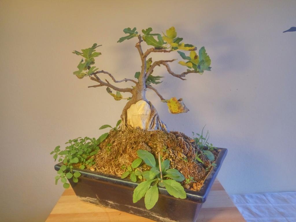 Ficus-Carica - Pagina 12 2020_810