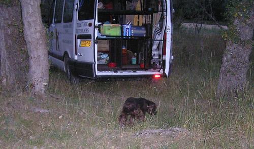 quel vehicule pour transporter vos chiens? - Page 2 05073110