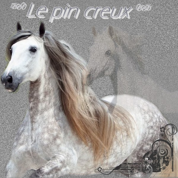 ¤oO.Le Pin Creux.Oo¤