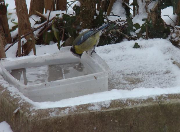 oiseaux d'hiver et oiseaux  divers Dsc01111