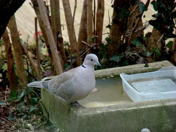 oiseaux d'hiver et oiseaux  divers Dsc01310