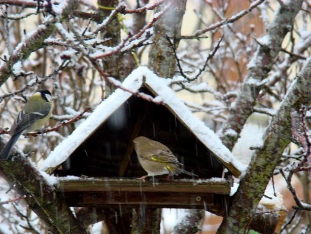 oiseaux d'hiver et oiseaux  divers Dsc01410