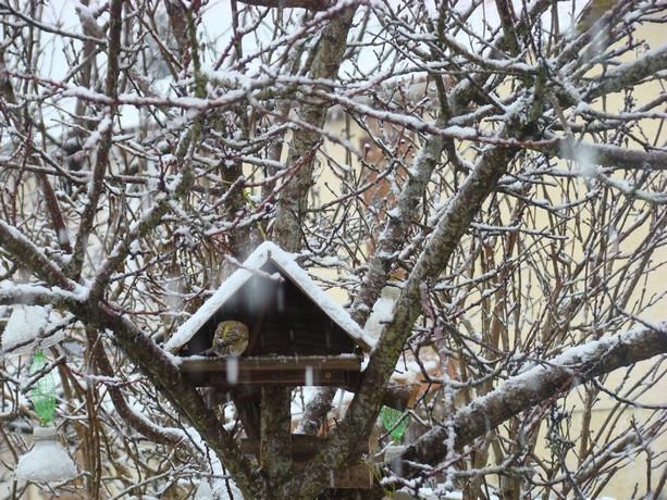 oiseaux d'hiver et oiseaux  divers Dsc01411